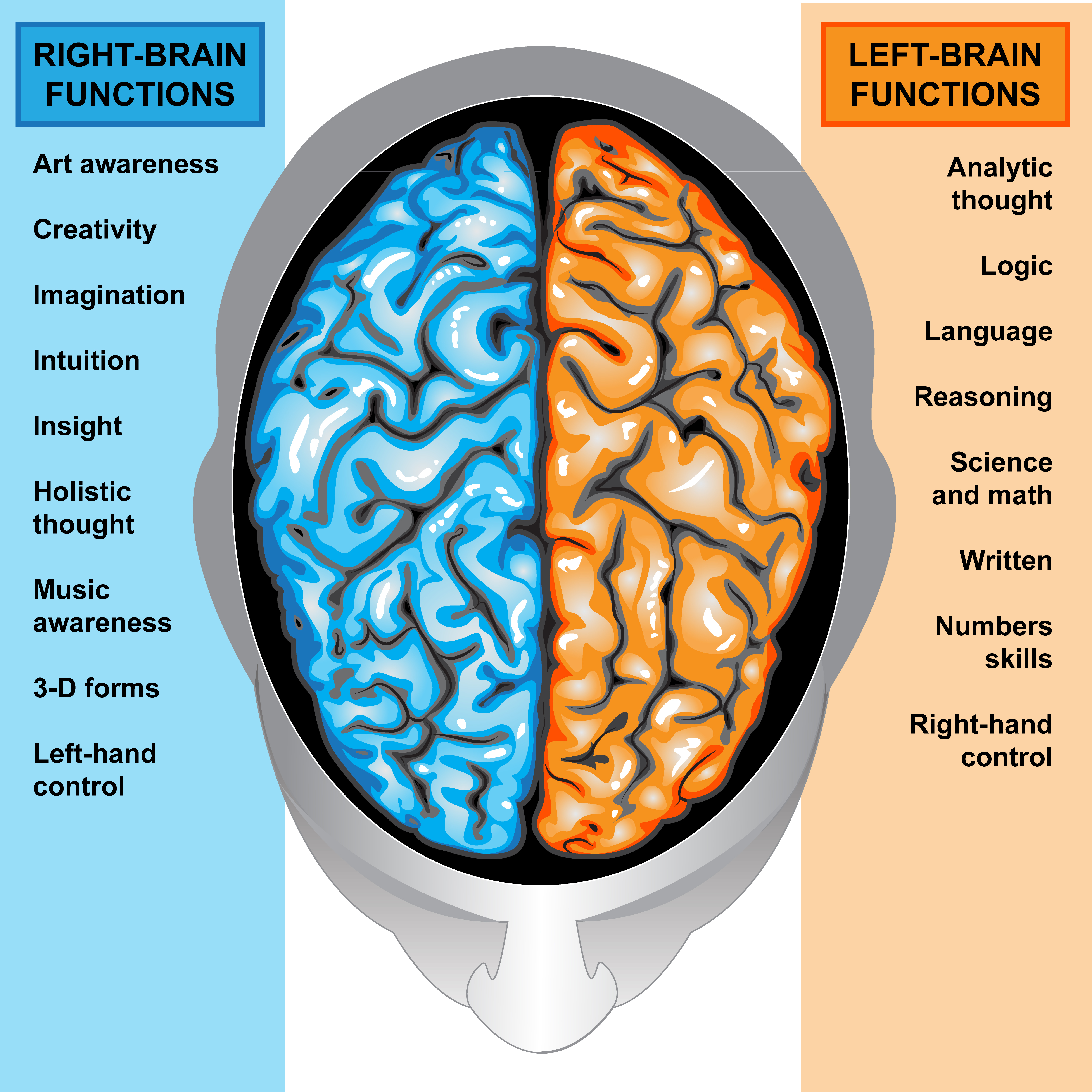 IIlustration body part,human brain left and right functions